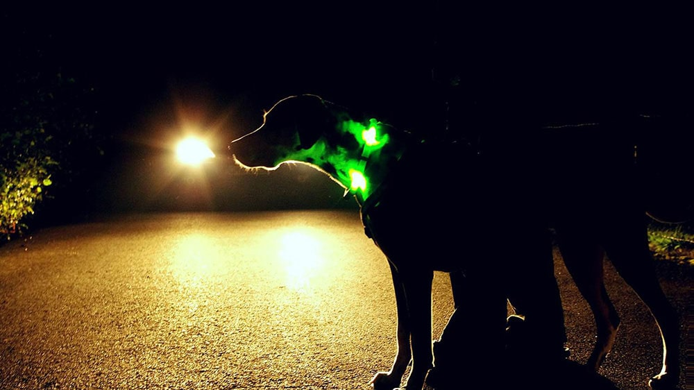 The LED collar LEUCHTIE guarantees the greatest safety possible for dogs and humans
