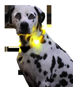 LED Leuchthalsband LEUCHTIE auch mit Akku und USB-Ladestation erhältlich