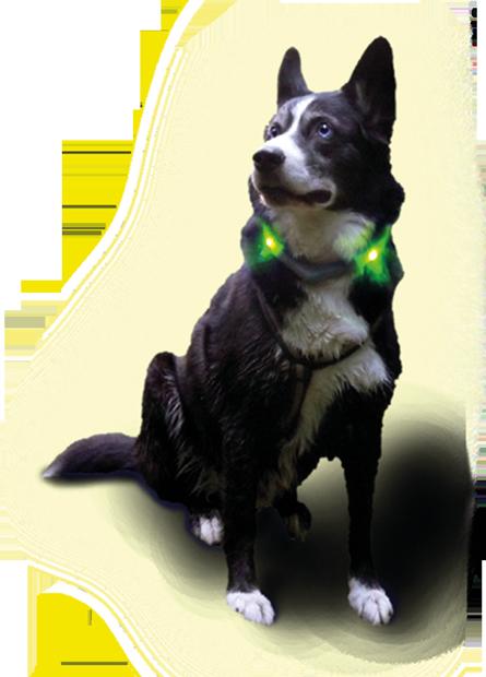Hund mit LEUCHTIE Plus