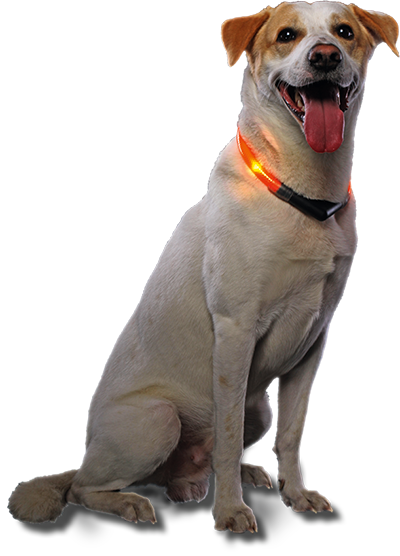 LED Leuchthalsband LEUCHTIE Pro Easy Charge mit Hund