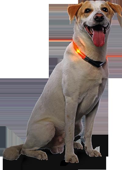 Hund mit LEUCHTIE Pro Easy Charge