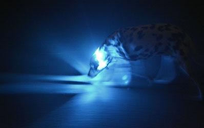 Seniorenedition vom LED Leuchthalsband LEUCHTIE